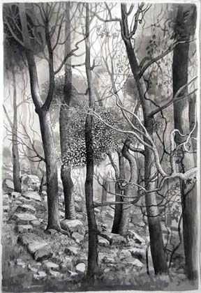 Forest with Stones - Painting by Philip Ayers
