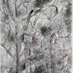 Trees - Painting thumbnail by Philip Ayers