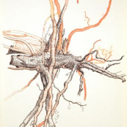 Untitled Study of Root - Painting thumbnail by Philip Ayers