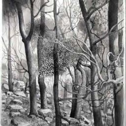Forest with Stones - Painting thumbnail by Philip Ayers